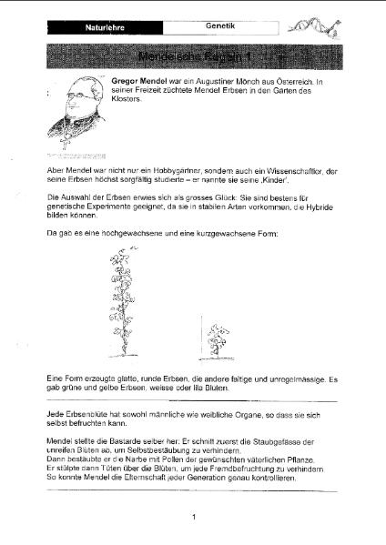 Mendelsche Regeln / Natur - Mensch - Gesellschaft / Biologie ...