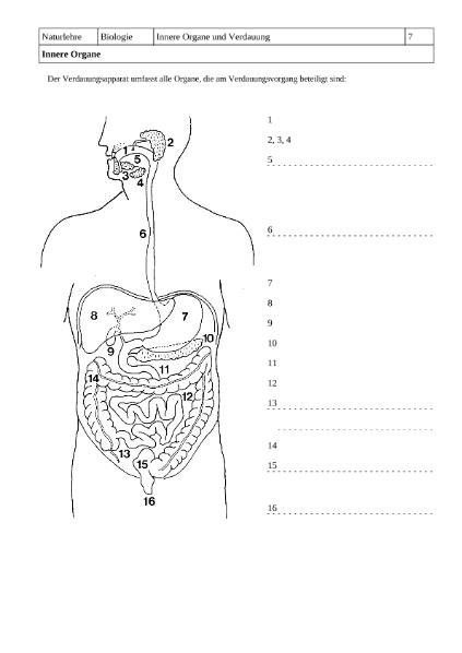 Innere Organe / Natur - Mensch - Gesellschaft / Biologie ...