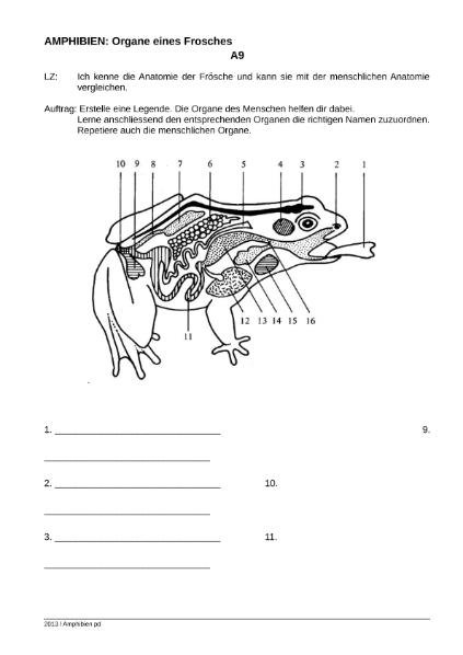 Fein Frosch äußere Anatomie Fotos - Anatomie Von Menschlichen ...