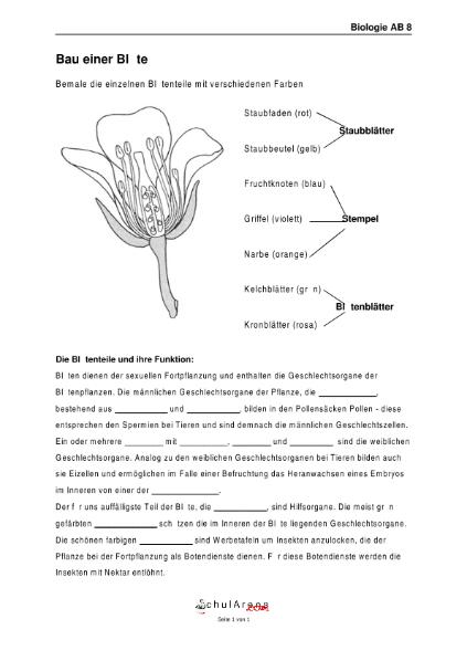 05 - Bau einer Blüte / Natur - Mensch - Gesellschaft / Biologie ...