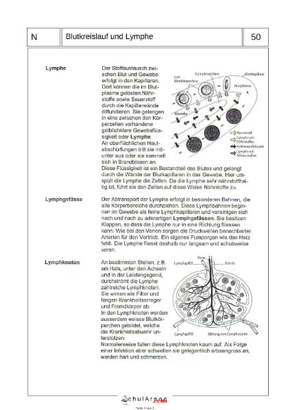 Kreislauf und Lymphe / Natur - Mensch - Gesellschaft / Biologie ...