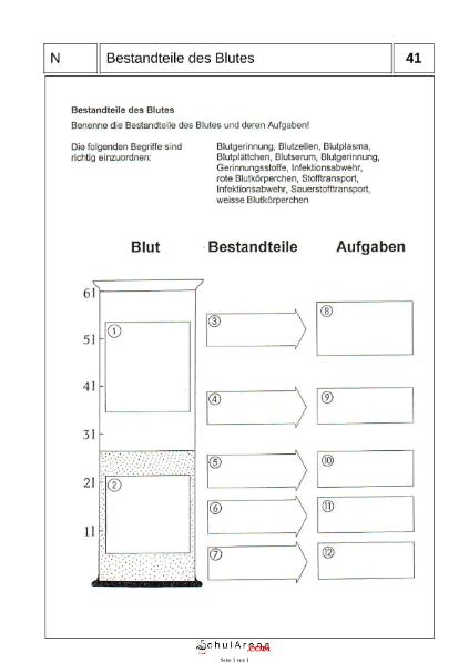 Bestandteile des Blutes / Natur - Mensch - Gesellschaft / Biologie ...
