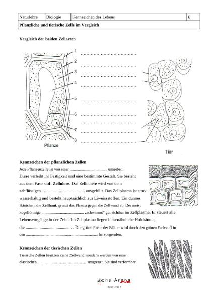 Arbeitsblatt Pflanzliche Tierische Zelle : Beste bewegung in die und aus arbeitsblatt von zellen